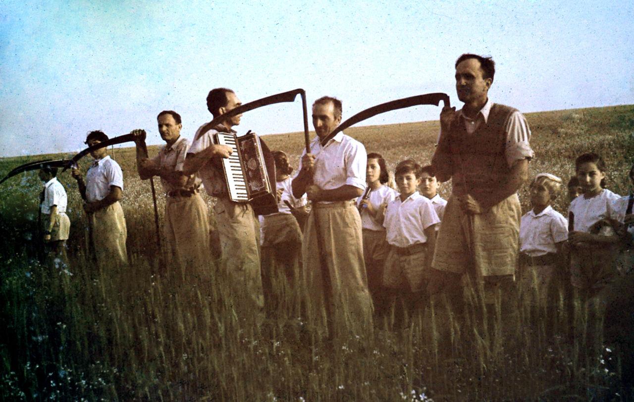 קציר תבואה בחג העומר, צולם בקיבוץ גבעת חיים בין השנים 1945-1935
