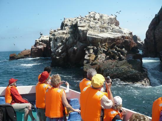 צופים נלהבים באריות הים